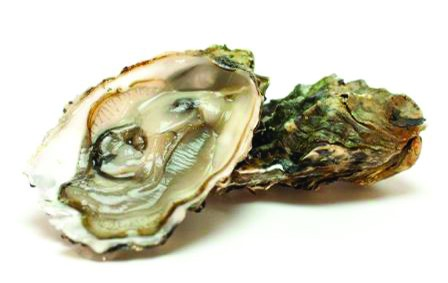 Zomer oesters